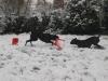 Odas erster Schnee