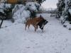 Max und Finel im Schnee